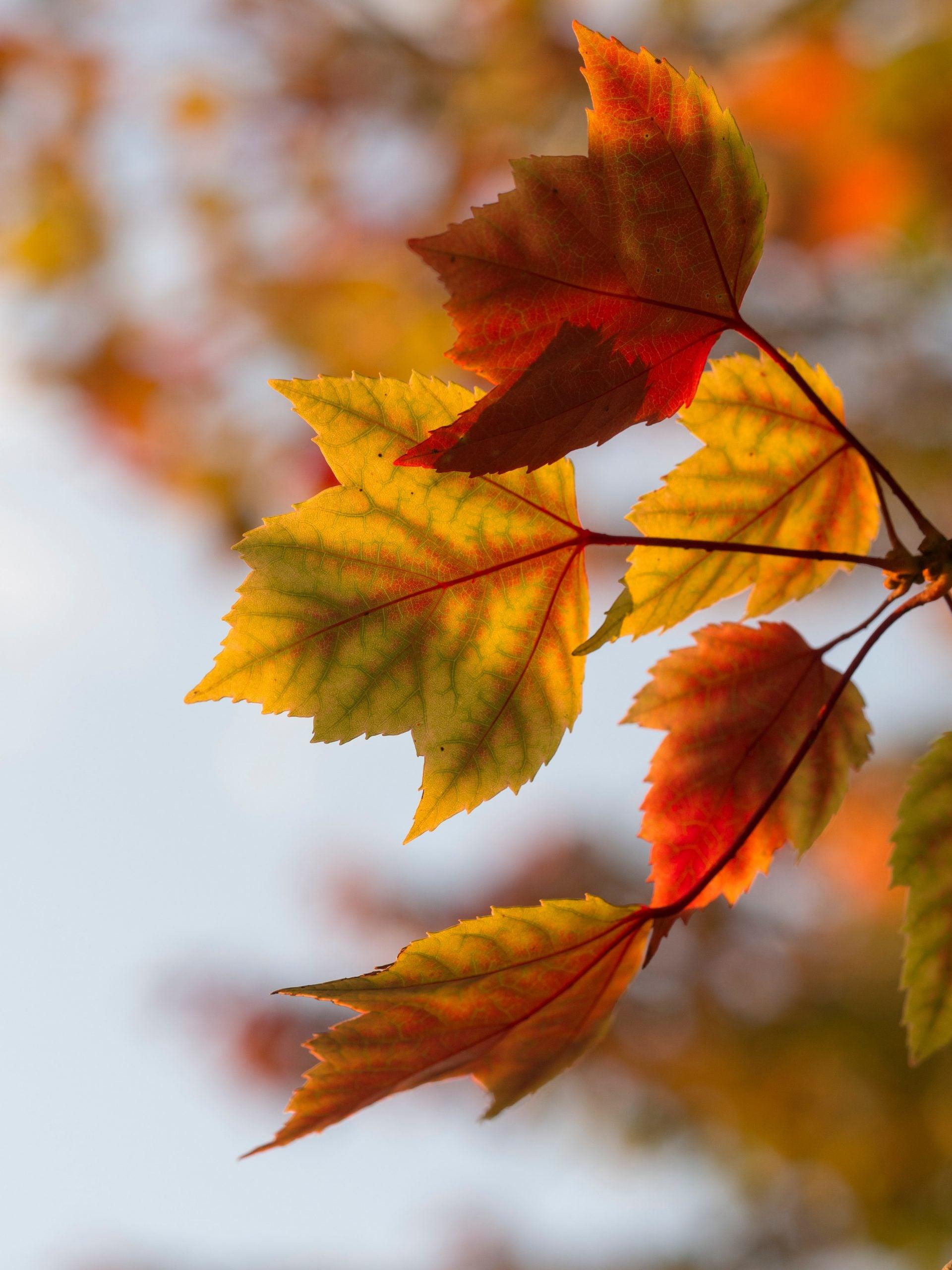 multi-color leaves in autumn